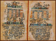 This image shows Maya animal constellations found in the Paris Codex.