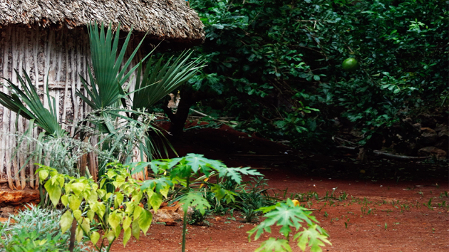 The patio of the family home of Don Hernán Perera Novero and Doña Felicita Huchin Itzá. They grow, and have working knowledge of, more than 80 medicinal plants native of the Yucatán. &nbsp;<span class='italic'>Photo Credit:&nbsp;José Huchim Herrera</span>