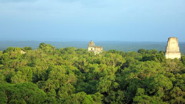 Las pirámides de Tik'al se levantan a través de una jungla lejana, como se ve desde arriba del parcialmente restaurado Templo IV. Las vistas que ofrecen estas altas estructuras hicieron posible que los mayas pudieran observar cautelosamente el cielo y el horizonte.&nbsp;<span class='italic'>Crédito de imagen:&nbsp;Julián Cruz Cortés</span>